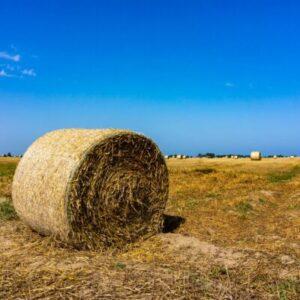 Заготовки продукции сельского хозяйства scaled e1603903144972 Материалы научно-исследовательских работ в АПК