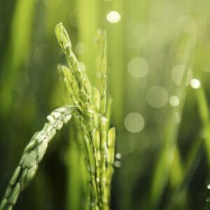 Защита сельскохозяйственных растений scaled e1603903114337 Материалы научно-исследовательских работ в АПК