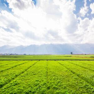 Общие вопросы сельского хозяйства scaled e1603903027531 Материалы научно-исследовательских работ в АПК