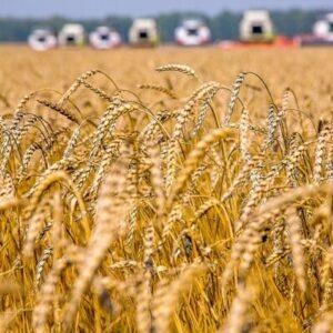 Растениеводство e1603902838394 Материалы научно-исследовательских работ в АПК