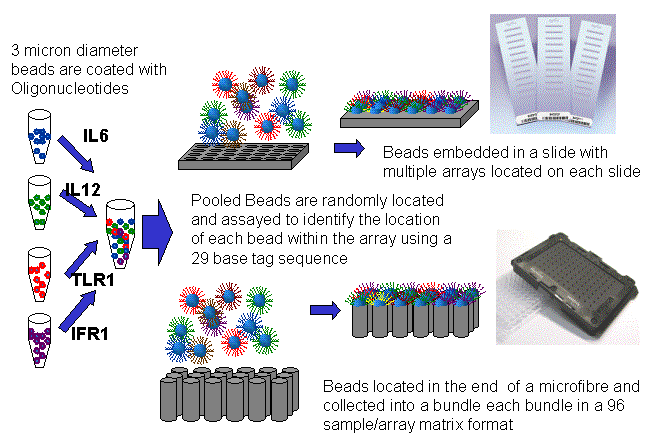 http://www.ipc.nxgenomics.org/newsletter/images/Mres2007.gif
