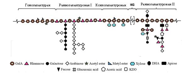 word image 122 Разработка бифидогенной кормовой добавки для сельскохозяйственных животных и птицы на основе ферментативного гидролиза пектина