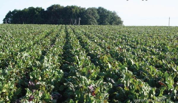 word image 1676 Разработка интенсивной технологии производства органической овощной продукции