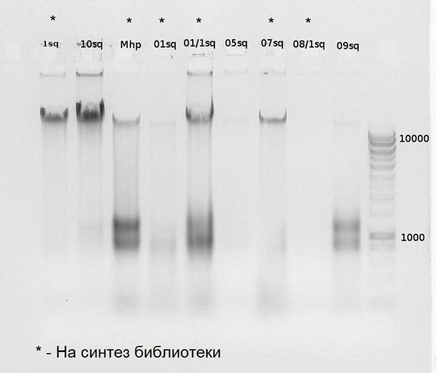 word image 2574 Оптимизация характеристик инновационного биопрепарата на основе функционально-адаптированной микрофлоры дикой птицы и разработка технологии получения и идентификация структуры индивидуальных БАВ с использованием технологии высокопроизводительного секвенирования бактериальных геномов.