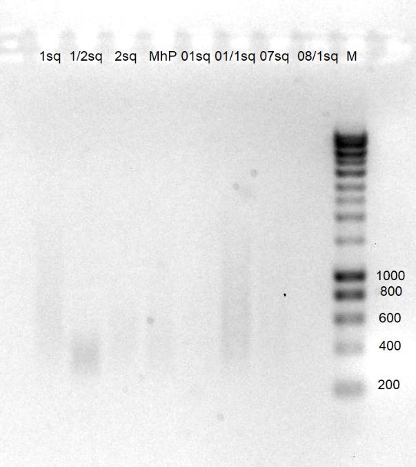 word image 2575 Оптимизация характеристик инновационного биопрепарата на основе функционально-адаптированной микрофлоры дикой птицы и разработка технологии получения и идентификация структуры индивидуальных БАВ с использованием технологии высокопроизводительного секвенирования бактериальных геномов.