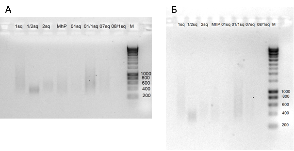 word image 2576 Оптимизация характеристик инновационного биопрепарата на основе функционально-адаптированной микрофлоры дикой птицы и разработка технологии получения и идентификация структуры индивидуальных БАВ с использованием технологии высокопроизводительного секвенирования бактериальных геномов.