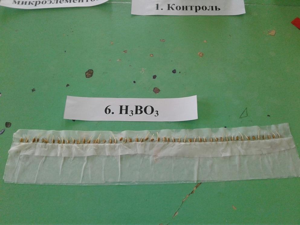 word image 517 Исследование влияния микроэлементных удобрений, используемых при обработке семян и листовой подкормки, на урожайность зерна озимой пшеницы в условиях Центрально-Черноземной зоны
