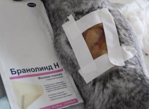D:\Документы по вет.медицине\АСПИРАНТ\Материалы термические ожоги\кролики ожоги эксп 3,4,5\эксперимент 5\повязка броннолид\30 июля\IMG_2636.JPG