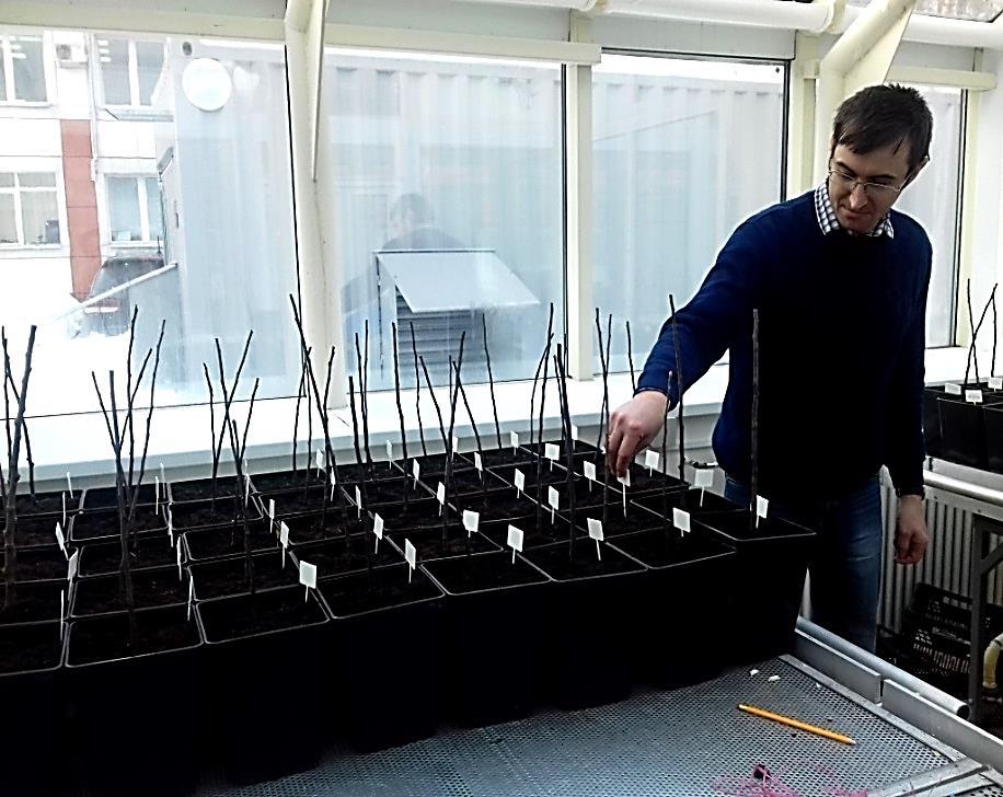 word image 1 Селекция зимостойких слаборослых клоновых подвоев яблони с использованием молекулярных маркеров