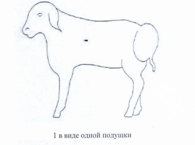 word image 1283 Создание нового высокопродуктивного конкурентоспособного шерстно-мясного типа тонкорунных овец кавказской породы, адаптированного к засушливым условиям Заволжья