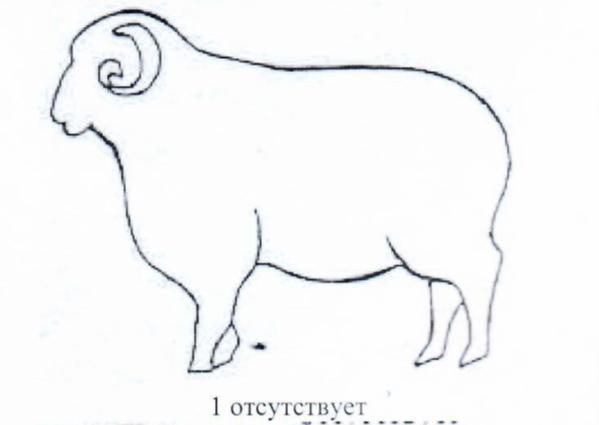 word image 1285 Создание нового высокопродуктивного конкурентоспособного шерстно-мясного типа тонкорунных овец кавказской породы, адаптированного к засушливым условиям Заволжья