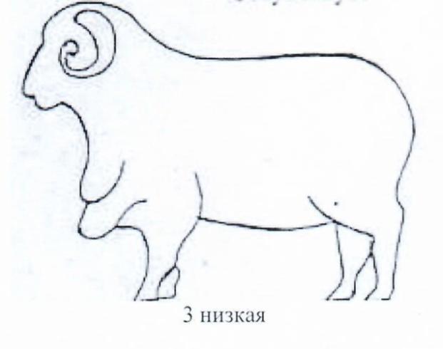 word image 1286 Создание нового высокопродуктивного конкурентоспособного шерстно-мясного типа тонкорунных овец кавказской породы, адаптированного к засушливым условиям Заволжья