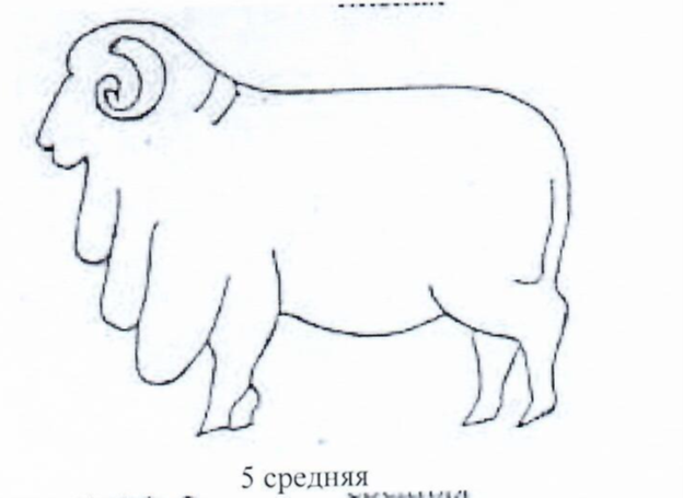 word image 1287 Создание нового высокопродуктивного конкурентоспособного шерстно-мясного типа тонкорунных овец кавказской породы, адаптированного к засушливым условиям Заволжья