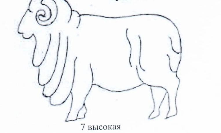 word image 1288 Создание нового высокопродуктивного конкурентоспособного шерстно-мясного типа тонкорунных овец кавказской породы, адаптированного к засушливым условиям Заволжья