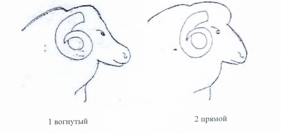 word image 1289 Создание нового высокопродуктивного конкурентоспособного шерстно-мясного типа тонкорунных овец кавказской породы, адаптированного к засушливым условиям Заволжья