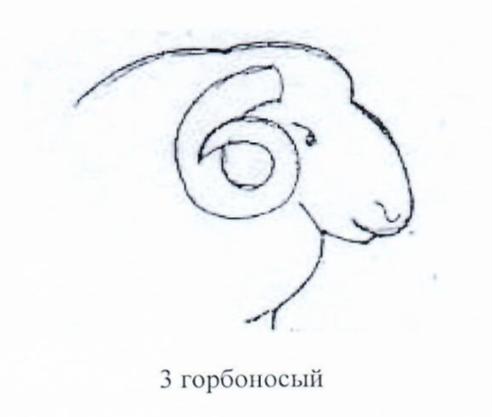 word image 1290 Создание нового высокопродуктивного конкурентоспособного шерстно-мясного типа тонкорунных овец кавказской породы, адаптированного к засушливым условиям Заволжья