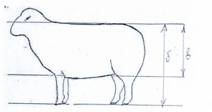 word image 1294 Создание нового высокопродуктивного конкурентоспособного шерстно-мясного типа тонкорунных овец кавказской породы, адаптированного к засушливым условиям Заволжья