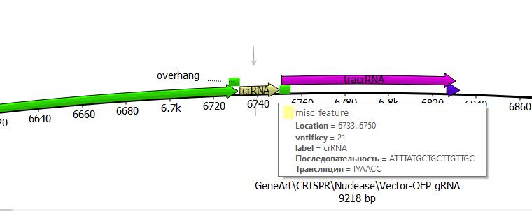 word image 1516 Использование методов редактирования генома CRISPR/CAS для повышения продуктивности сельскохозяйственных животных (2 этапа).