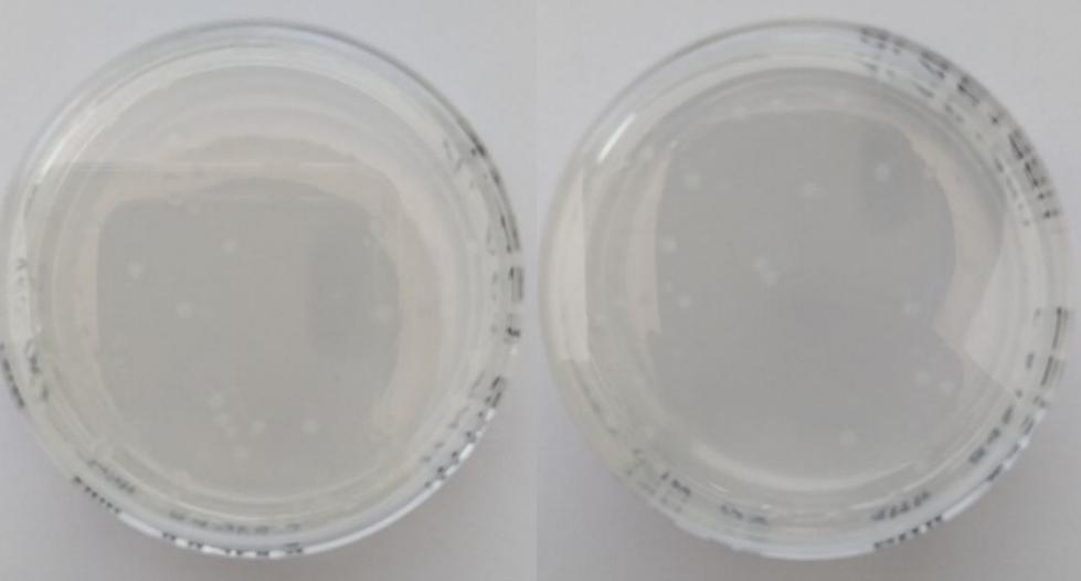 word image 1518 Использование методов редактирования генома CRISPR/CAS для повышения продуктивности сельскохозяйственных животных (2 этапа).