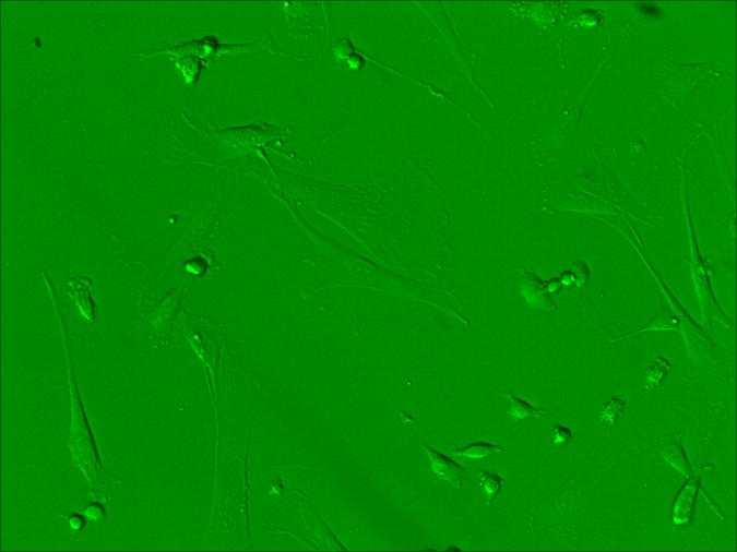 word image 1528 Использование методов редактирования генома CRISPR/CAS для повышения продуктивности сельскохозяйственных животных (2 этапа).