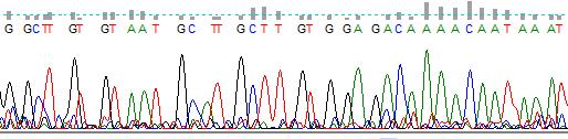 word image 1539 Использование методов редактирования генома CRISPR/CAS для повышения продуктивности сельскохозяйственных животных (2 этапа).