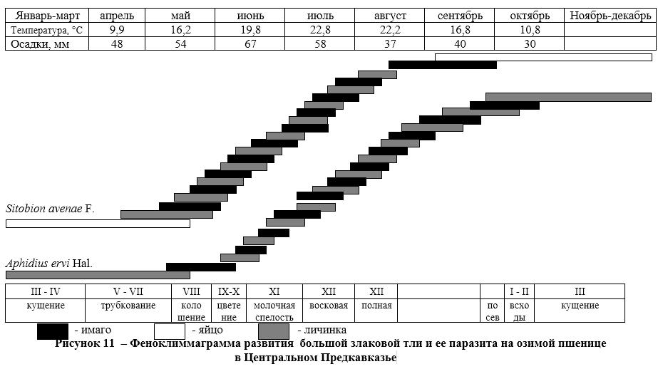 word image 1644 Разработка системы биологической защиты озимой пшеницы от комплекса вредителей