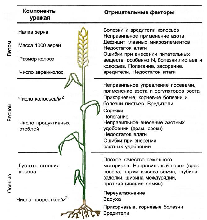 word image 187 Использование цифровых технологий для производства, оценки урожая, сбора, хранения сельскохозяйственной продукции (в т.ч. индекс NDVI)