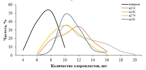 word image 196 Разработка методов индукции полиплоидии картофеля in vitro