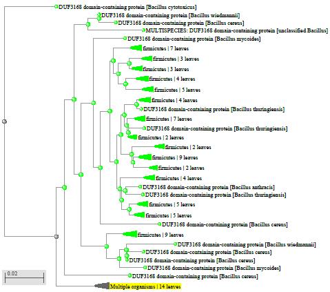 word image 1988 Разработка экологически чистого инновационного фагового биопрепарата для снижения и/или предотвращения порчи плодоовощной продукции