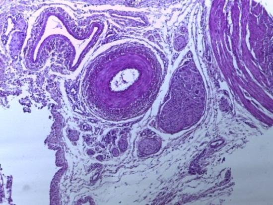word image 227 Разработка и научно-практическое обоснование способов замены кормовых антибиотиков в рационе современных кроссов птицы на биологически безопасные стимуляторы роста