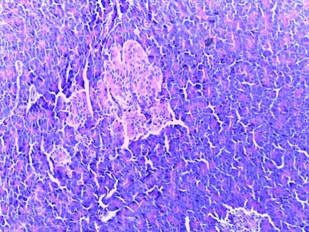word image 249 Разработка и научно-практическое обоснование способов замены кормовых антибиотиков в рационе современных кроссов птицы на биологически безопасные стимуляторы роста