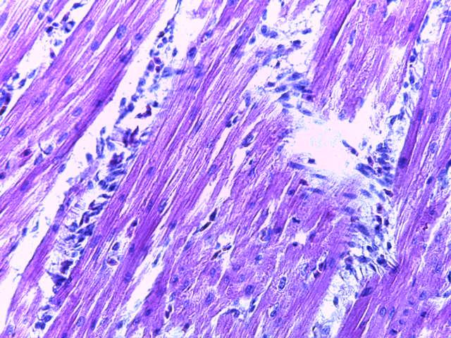 word image 255 Разработка и научно-практическое обоснование способов замены кормовых антибиотиков в рационе современных кроссов птицы на биологически безопасные стимуляторы роста