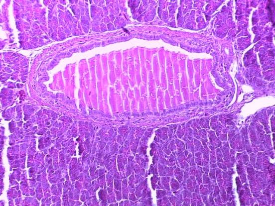 word image 261 Разработка и научно-практическое обоснование способов замены кормовых антибиотиков в рационе современных кроссов птицы на биологически безопасные стимуляторы роста