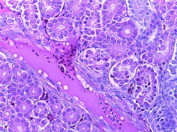 word image 264 Разработка и научно-практическое обоснование способов замены кормовых антибиотиков в рационе современных кроссов птицы на биологически безопасные стимуляторы роста