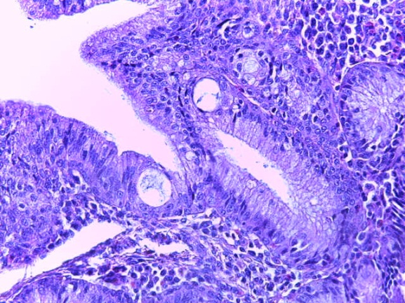 word image 269 Разработка и научно-практическое обоснование способов замены кормовых антибиотиков в рационе современных кроссов птицы на биологически безопасные стимуляторы роста
