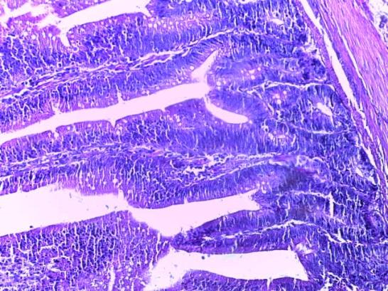 word image 283 Разработка и научно-практическое обоснование способов замены кормовых антибиотиков в рационе современных кроссов птицы на биологически безопасные стимуляторы роста