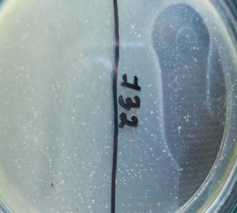 word image 324 Разработка экологически чистого инновационного фагового биопрепарата для снижения и/или предотвращения порчи плодоовощной продукции