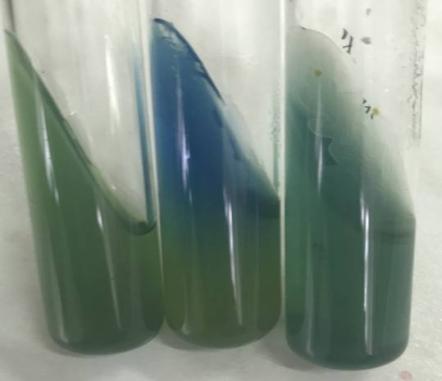 word image 326 Разработка экологически чистого инновационного фагового биопрепарата для снижения и/или предотвращения порчи плодоовощной продукции