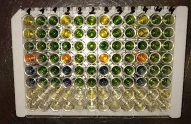 word image 351 Разработка экологически чистого инновационного фагового биопрепарата для снижения и/или предотвращения порчи плодоовощной продукции