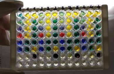 word image 352 Разработка экологически чистого инновационного фагового биопрепарата для снижения и/или предотвращения порчи плодоовощной продукции
