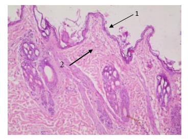 word image 428 Разработка наноматериала, биосовместимого с органами и тканями животных для применения в лечении ожоговых ран и эндогенной имплантации трубчатых органов
