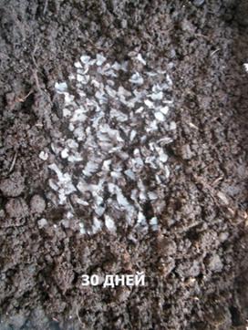 word image 583 Разработка новых приемов создания экологически безопасного материала на основе растительного сырья и отходов сахараперерерабатываюей промышленности