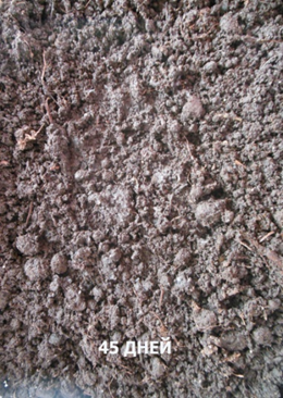 word image 585 Разработка новых приемов создания экологически безопасного материала на основе растительного сырья и отходов сахараперерерабатываюей промышленности