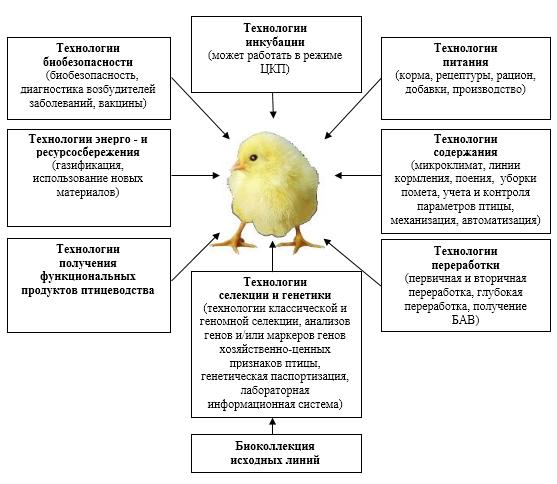 word image 597 Разработка методических подходов по порядку и условиям проведения оценки племенной ценности сельскохозяйственной птицы