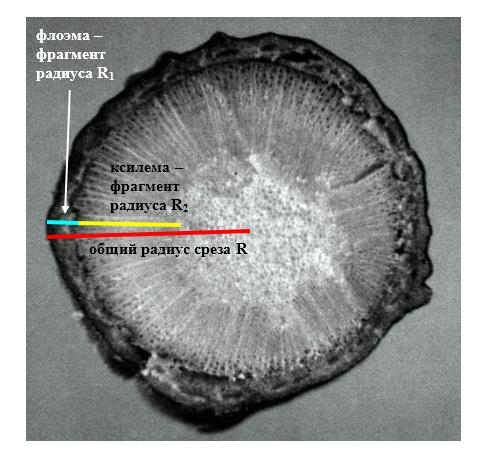 word image 77 Селекция зимостойких слаборослых клоновых подвоев яблони с использованием молекулярных маркеров