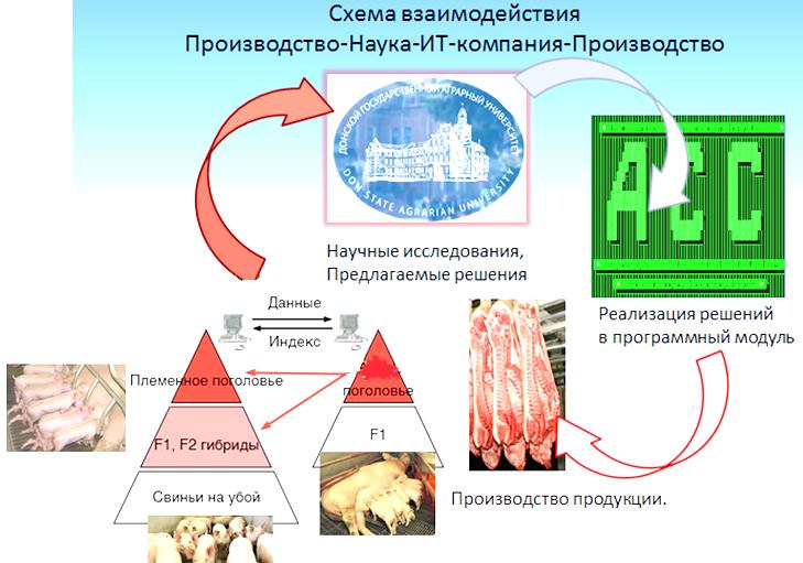 word image 532 Разработка инновационных технологий повышения продуктивности и качества продукции свиноводства