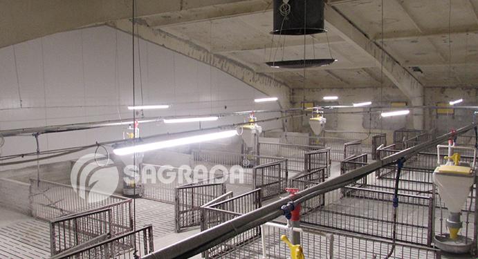 word image 551 Разработка инновационных технологий повышения продуктивности и качества продукции свиноводства