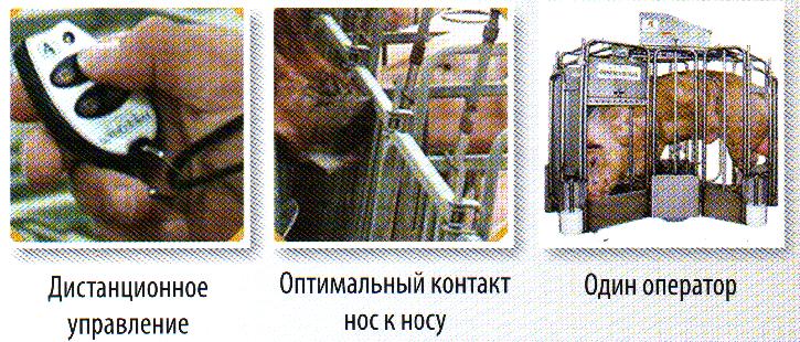 word image 558 Разработка инновационных технологий повышения продуктивности и качества продукции свиноводства