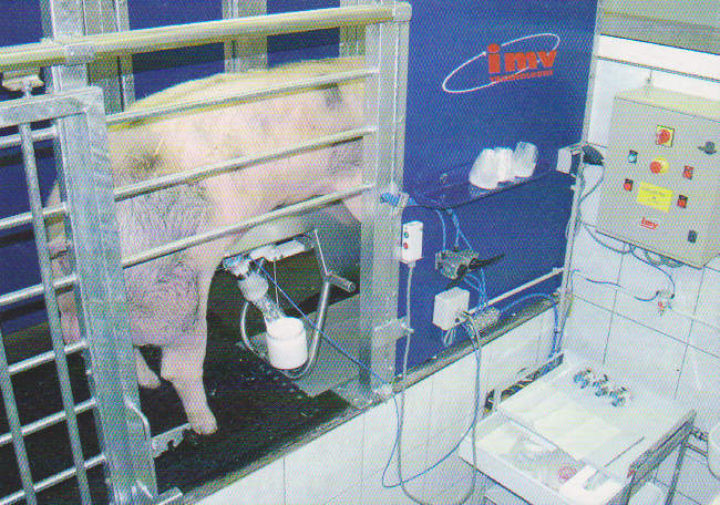 word image 559 Разработка инновационных технологий повышения продуктивности и качества продукции свиноводства