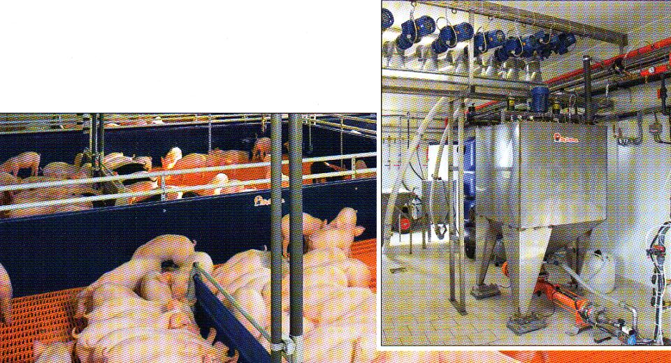 word image 562 Разработка инновационных технологий повышения продуктивности и качества продукции свиноводства